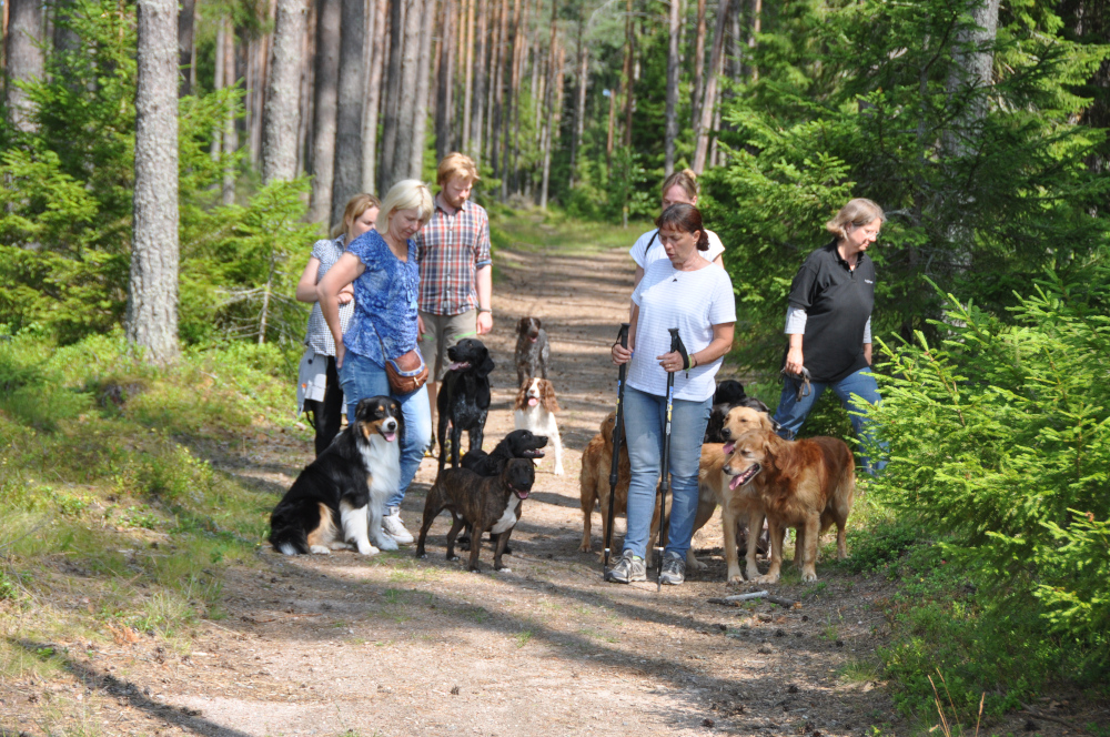 packwalk